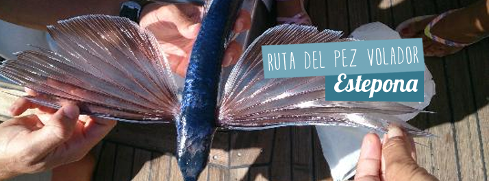 Flying Fish Route, experiences with Sailor Tourism in Estepona